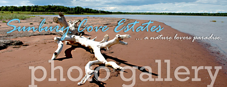 pei vacations and waterfront
